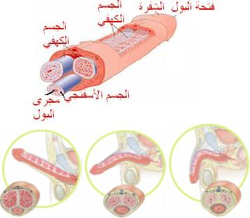 النيك الممتع الزبر في الكس http://www.alter-med.com/htm/man_products/penis_enlargement_patch.html